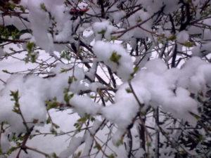 снегопад в апреле в воронеже